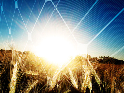 Agrophotovoltaik als zusätzliche Einnahmequelle